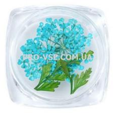 Сухоцветы для декора №01 зонтики голубые  фото   PRO-VSE