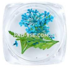 Сухоцветы для декора №03 зонтики синие и листья  фото   PRO-VSE