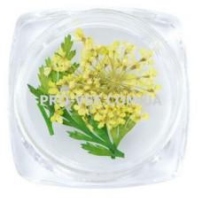 Сухоцветы для декора №04 зонтики желтые и листья фото | PRO-VSE