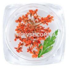 Сухоцветы для декора №05 зонтики оранжевые и листья фото | PRO-VSE