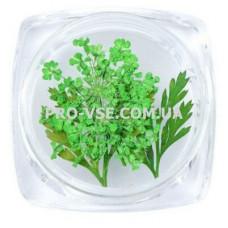Сухоцветы для декора №06 зонтики зеленые и листья фото | PRO-VSE