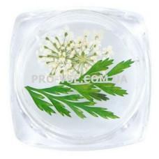 Сухоцветы для декора №07 зонтики белые и листья фото   PRO-VSE