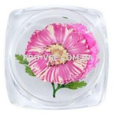 Сухоцветы для декора №29 ромашки фуксия и листья фото | PRO-VSE