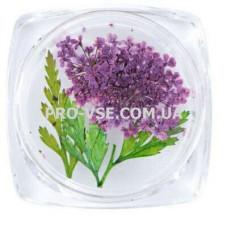Сухоцветы для декора №33 зонтики фиолетовые и листья фото | PRO-VSE