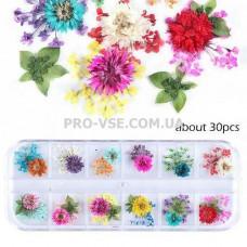 Сухоцветы для декора НАБОР №52 микс зонтики, ромашки и листья