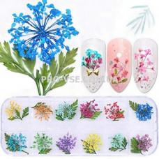 Сухоцветы для декора НАБОР №54 Зонтики и листья