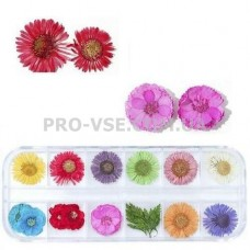Сухоцветы для декора НАБОР №53 ромашки, незабудки и листья