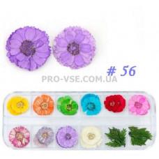 Сухоцветы для декора НАБОР №56 незабудки и листья фото | PRO-VSE